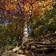 Preserve Trails In Fall Six Art Print