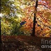 Preserve Trails In Fall Three Art Print