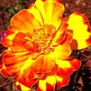 Prettiest Flower In The Garden Art Print
