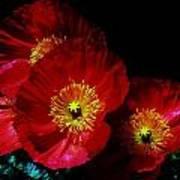 Pretty As A Poppy Art Print by Helen Carson