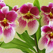 Pretty Faces - Orchid Art Print