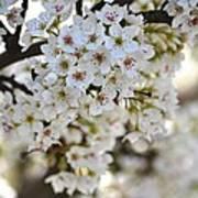 Pretty Flowering Trees Art Print