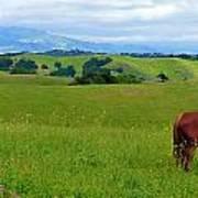 Pretty Horse Grazing In Rolling Hills Art Print