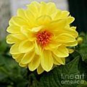 Pretty In Yellow Art Print