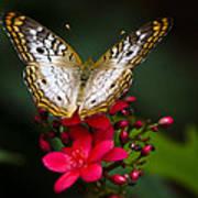 Pretty Little Butterfly  Art Print