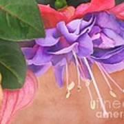 Pretty Little Fuchsia Art Print