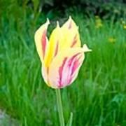 Pretty Pastel Tulip Art Print