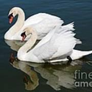 Pretty Swan Pair Art Print