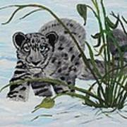 Preying In The Snow Art Print by Carol Hamby