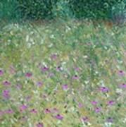 Priairie Cone Flowers Art Print