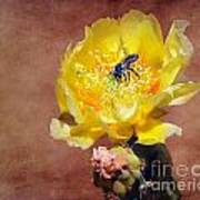 Prickly Pear And Bee Art Print