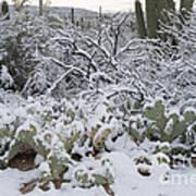 Prickly Pear And Saguaro Cacti Art Print