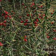 Prickly Pete Cactus Art Print
