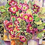 Primroses In Pots Art Print by Ann  Nicholson