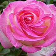 Princess Of Monaco Rose 1 Art Print
