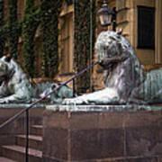 Princeton Tigers Art Print