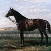 Prize Horse Art Print
