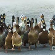 Professional Ducks 2 Art Print