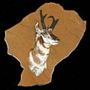Pronghorn  Pictograph Art Print