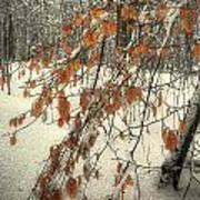 Prospect Park Winter Scene Art Print