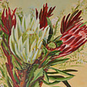 Protea Bunch Art Print