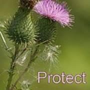 Protect Nature Art Print