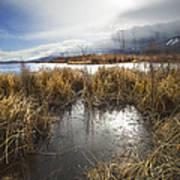 Protected Wetlands Art Print