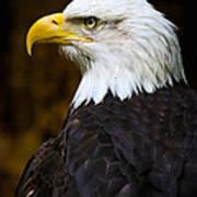 Proud Eagle Profile Art Print