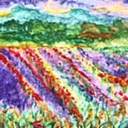 Provence France Field Of Flowers Art Print