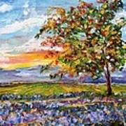Provence Lavender Fields Art Print