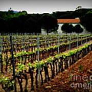 Provence Vineyard Art Print