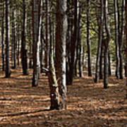 Provin Trails Park Forest Print by Richard Gregurich