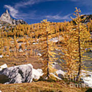 Prusik Peak Above Larch Grove Art Print