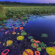 Psychedelic Shore - Great Meadows Nwr Art Print by Sylvia J Zarco