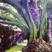 Psychedelic Purple Fuschsia Earthy Tree Street Landscape Los Angeles Cool Artistic Affordable Art Art Print