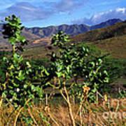 Puerto Rico Cayey Mountains Near Salinas Art Print