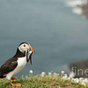 Puffin With Sandeels Art Print