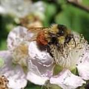 Puffy Bee Art Print
