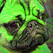Pug 20130126v4 Print by Wingsdomain Art and Photography