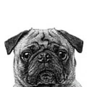 Pug Dog Square Format Art Print