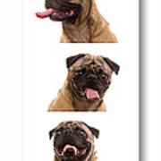 Pug Photo Booth Art Print