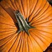 Pumpkin Aerial View Art Print