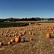 Pumpkin Field Art Print