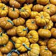 Pumpkin Galore. Art Print