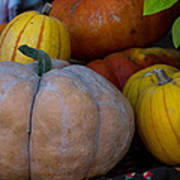 Pumpkin Harvest  Art Print