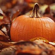 Pumpkin In Leaves Art Print