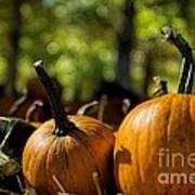 Pumpkin Line Up Art Print