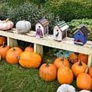 Pumpkins And Birdhouses Art Print