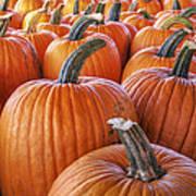 Pumpkins Galore - Autumn - Halloween Art Print