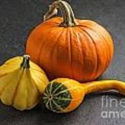 Pumpkins On A Slate Plate Print by Palatia Photo